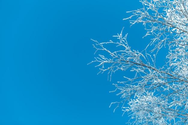 冷ややかな木々や茂みのある冬景色