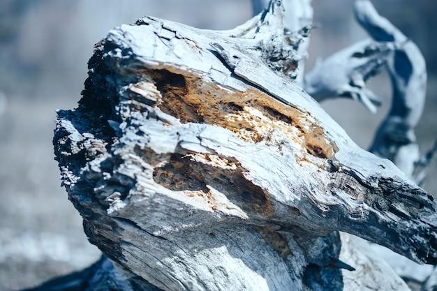 古い木のキツツキ穴がたるんで晴れた春の日に死ぬ木
