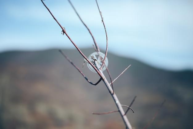 自然の背景に木の枝にプラスチックのスプールごみ。