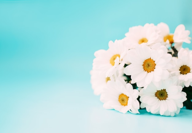 Белые лепестки цветов на синем фоне