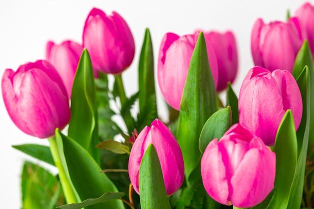 美しいピンクのチューリップの花のグループ