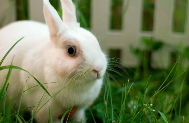 フェンスの近くの白いウサギ
