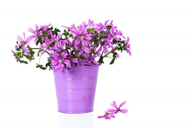 私はバケツで野生の紫色の花
