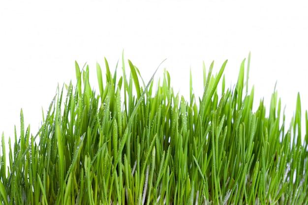 Свежая влажная трава