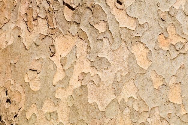 Фон текстура дерева