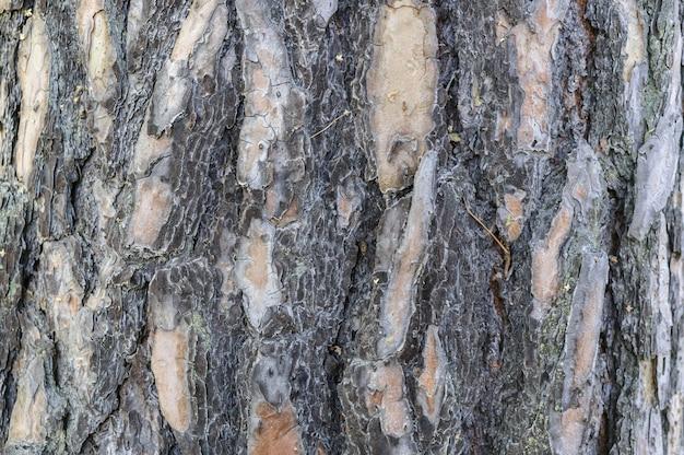 Вертикальная текстура кора старой сосны