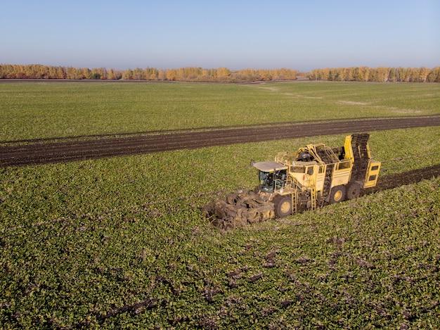 日中のテンサイ畑の機械の高さの収穫