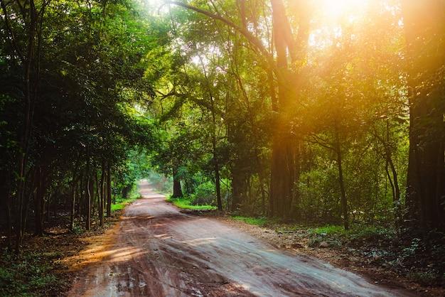ジャングルの中で歩くハイカー道路森林太陽アジアスリランカ