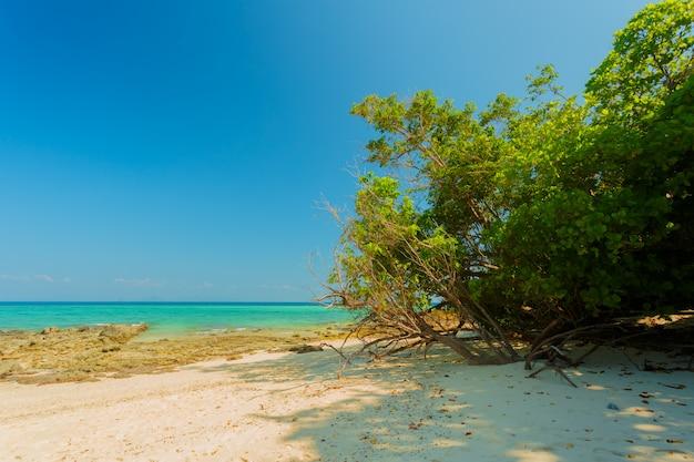海。熱帯の楽園の背景