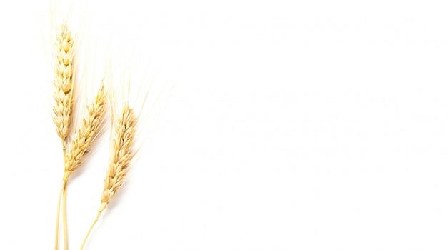 小麦の穂ホワイトバックグラウンド