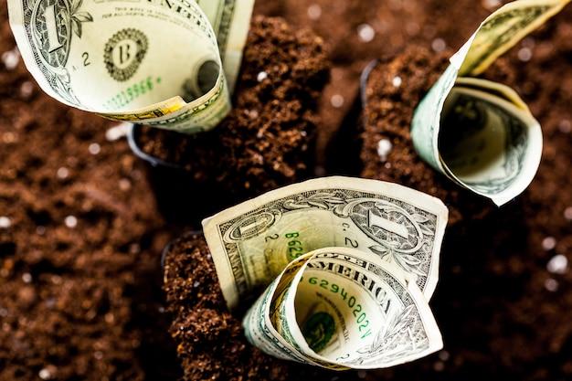 アメリカのドルは地面から成長します