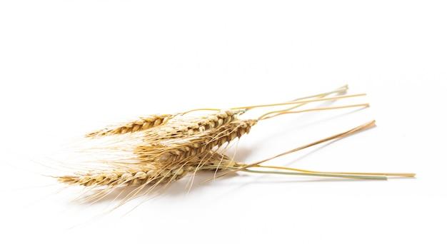 小麦の穂、白で隔離