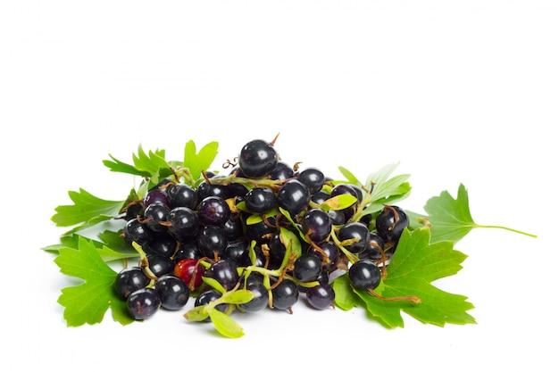 緑の葉、新鮮なフルーツ、白で隔離される黒スグリの実、