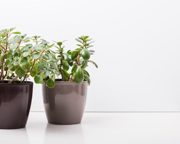 家の植物多肉植物
