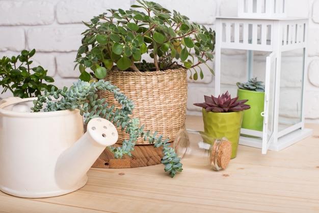 多肉植物、鉢の観葉植物