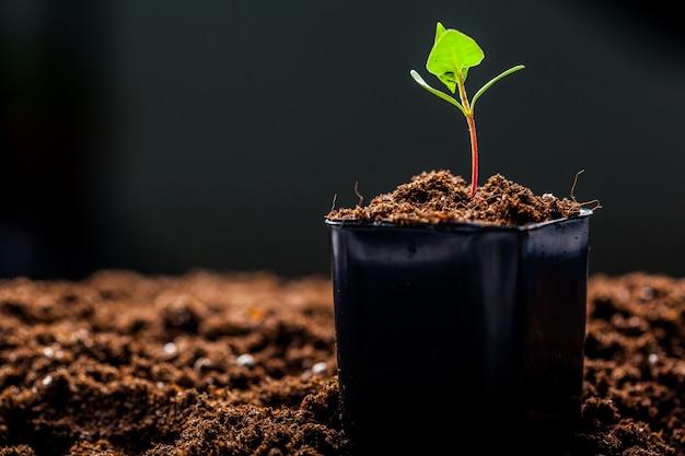 緑の芽が地面に発芽している