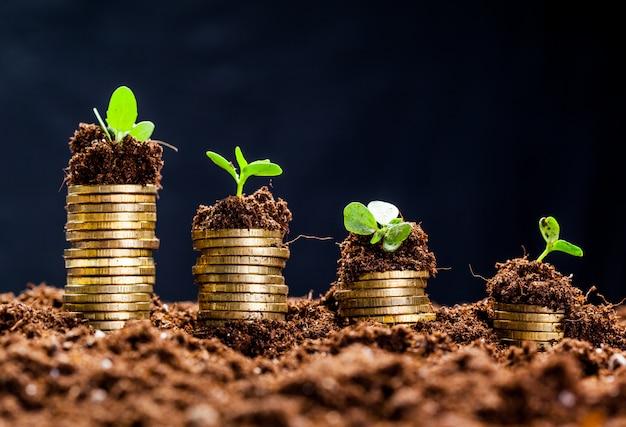 若い植物と土壌中の黄金のコイン。お金の成長の概念