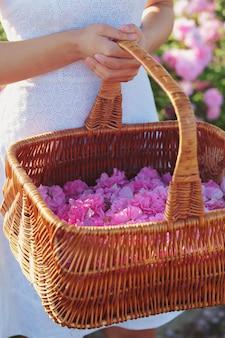 バラのクローズアップを保持している女性。夏の季節