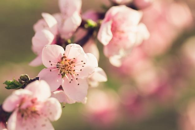 ピンクの花と春の木