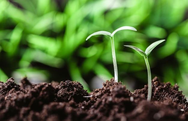 Молодой росток в весеннее время, крупным планом.
