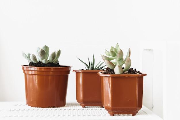 Группа суккулентных растений в небольших коричневых пластиковых горшках в помещении