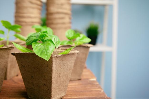 春の温室で苗を植えることをクローズアップ