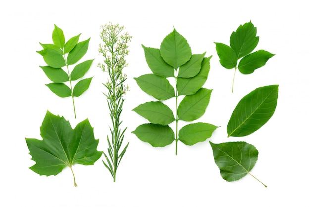 白地に緑の葉