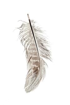 鳥の羽の分離