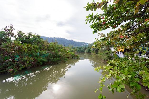 夏の森の川の範囲の風景。