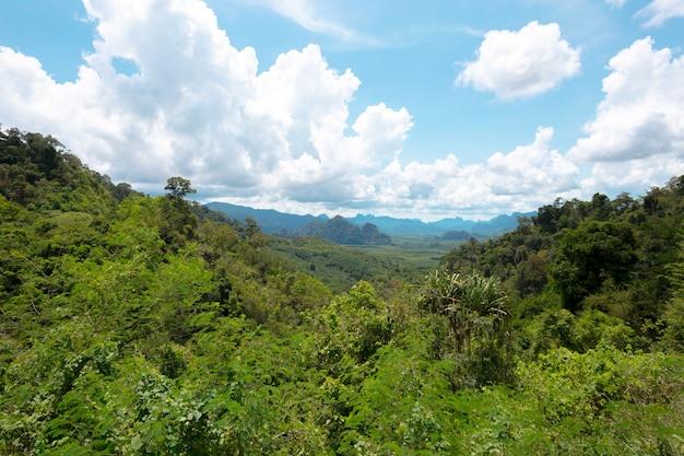 Ландшафт холма в тропическом лесу