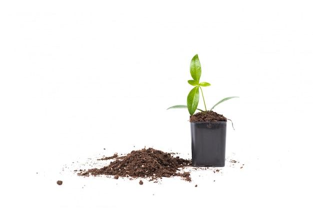白で隔離される若い植物