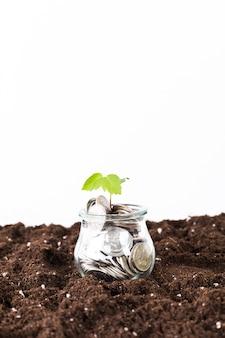 コインで成長している木