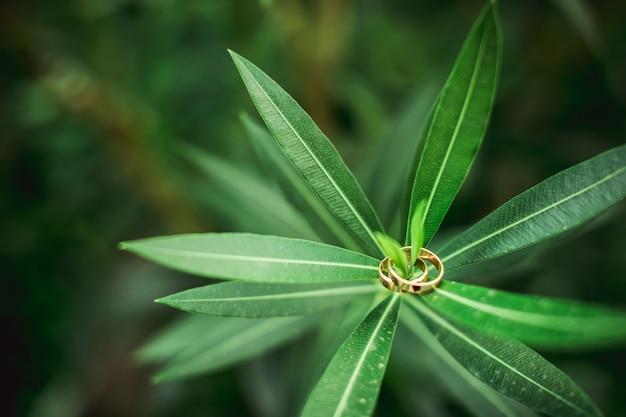 緑の葉と結婚指輪をクローズアップ