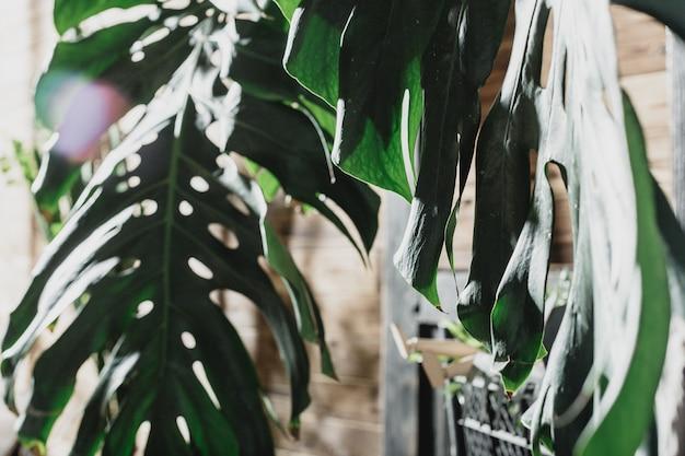 熱帯の葉の組成
