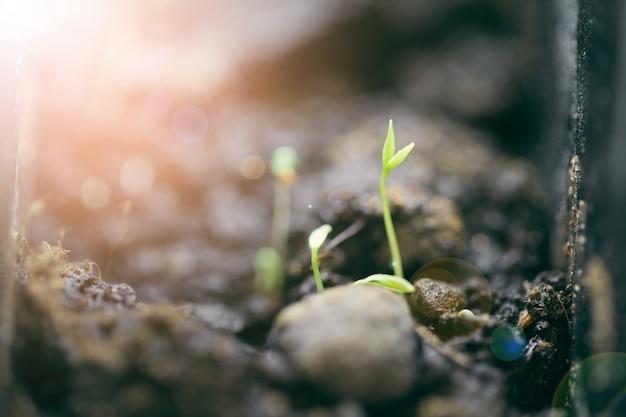 土壌から成長している緑の苗