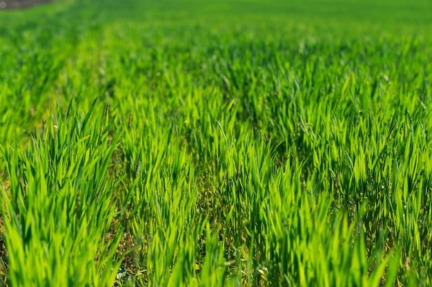 美しい緑の野原