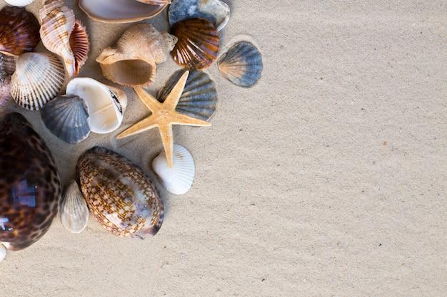 背景としての砂と貝殻