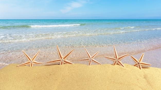 Ракушки на пляже летом с песком