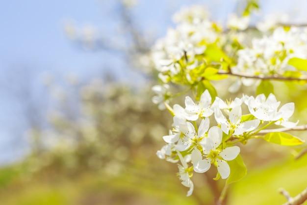 ぼやけた自然の桜