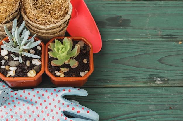 Сочный процесс трансплантации. мини-рассада и садовые принадлежности