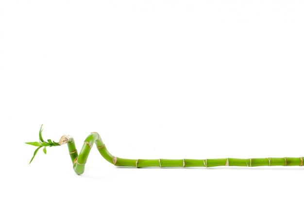 ラッキーグリーン竹