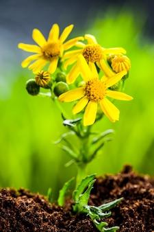 有機性土の種から育つ緑の芽
