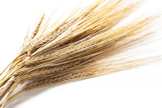 白で隔離される小麦の穂