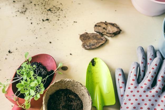 木製のテーブルに苗泥炭ポットに植える