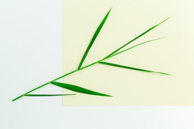 紙の上の緑の葉