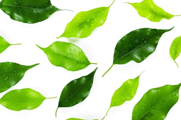 白で隔離の葉