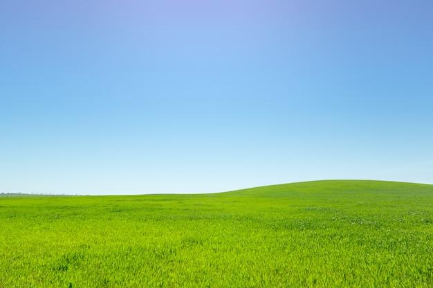 Красивое зеленое поле