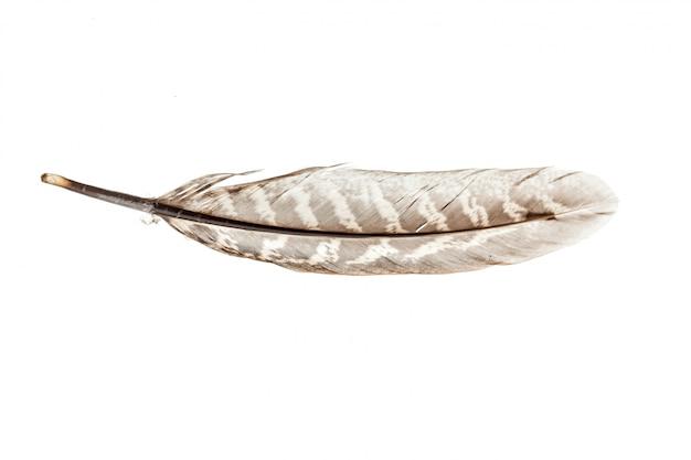 白で隔離される鳥の羽