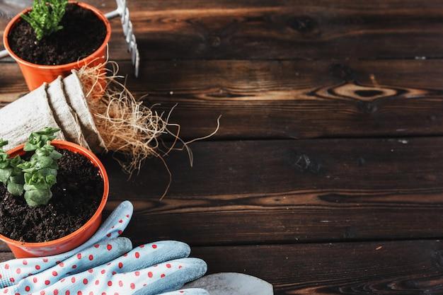 様々な観葉植物、園芸用手袋、ポッティング土壌、白い木製の背景にこてのコレクション。鉢植えの家の植物の背景。