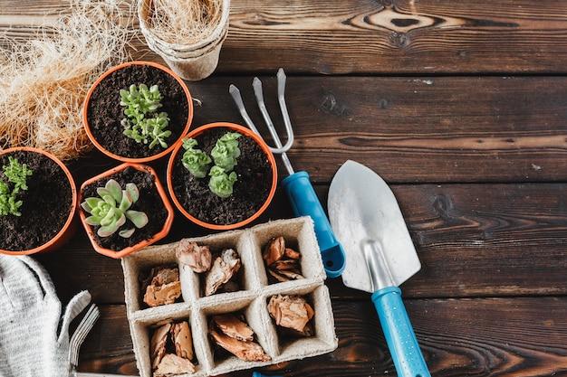 花屋のコンセプト。木製の背景に美しい多肉植物を植え直す